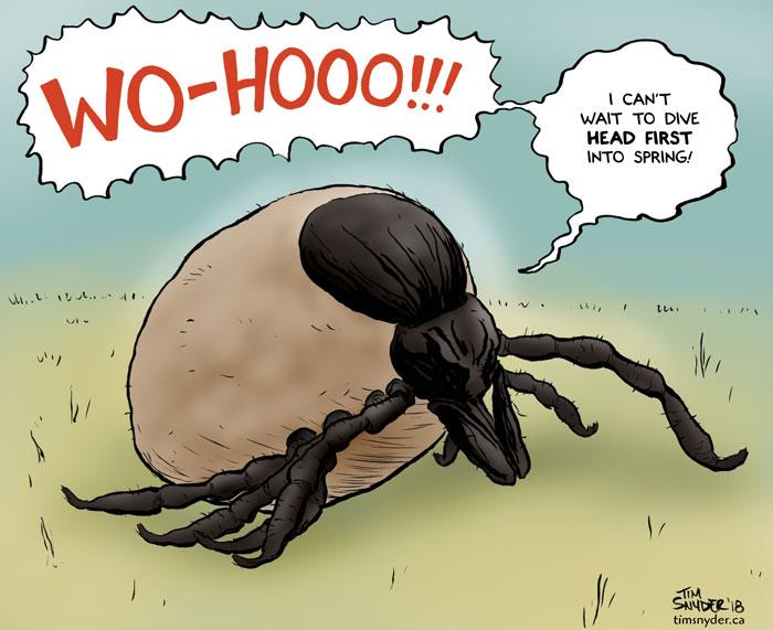 Spring Ticks